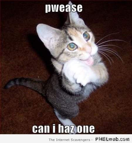 Begging cat meme at PMSLweb.com