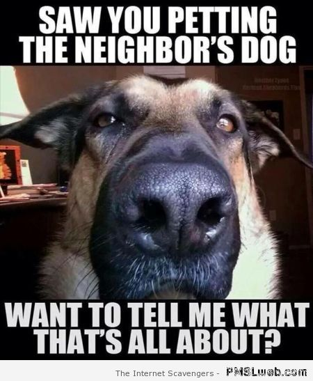 Saw you petting the neighbor's dog meme – Monday madness at PMSLweb.com