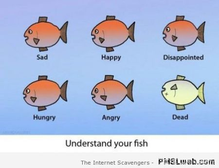 Understand your fish – Weekend lolz at PMSLweb.com