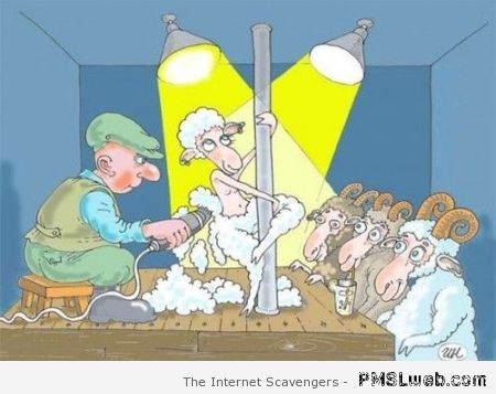 Shearing sheep funny cartoon at PMSLweb.com