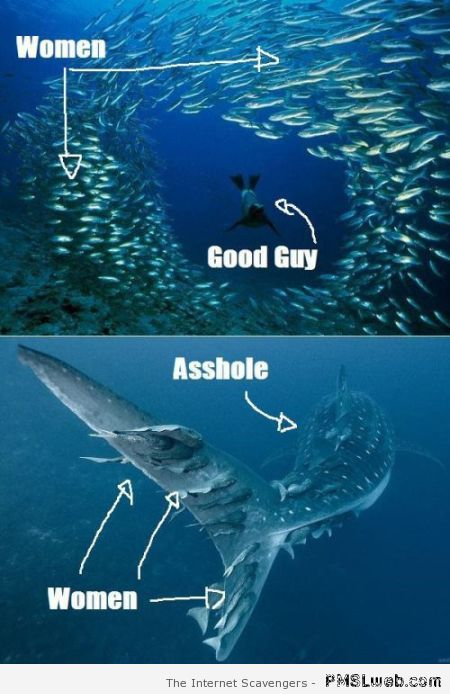 The good guy versus the a**hole humor at PMSLweb.com