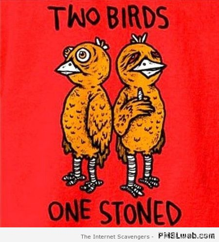 Two birds one stoned humor at PMSLweb.com