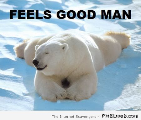 Polar bear feels good man at PMSLweb.com