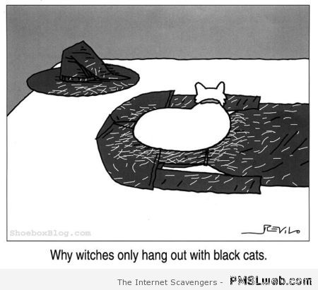 Why witches have black cats funny at PMSLweb.com