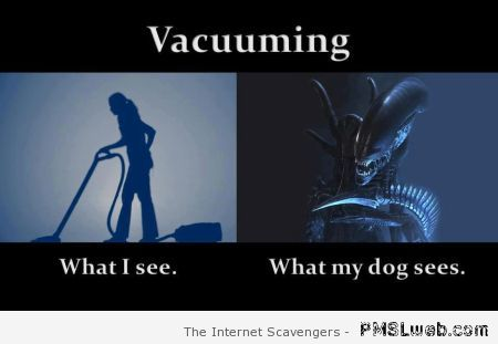 Vacuuming what my dog sees at PMSLweb.com