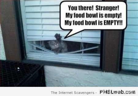 My food bowl is empty cat meme at PMSLweb.com