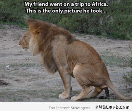 My friend's only picture from Africa meme at PMSLweb.com
