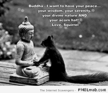 Funny squirrel and Buddha at PMSLweb.com