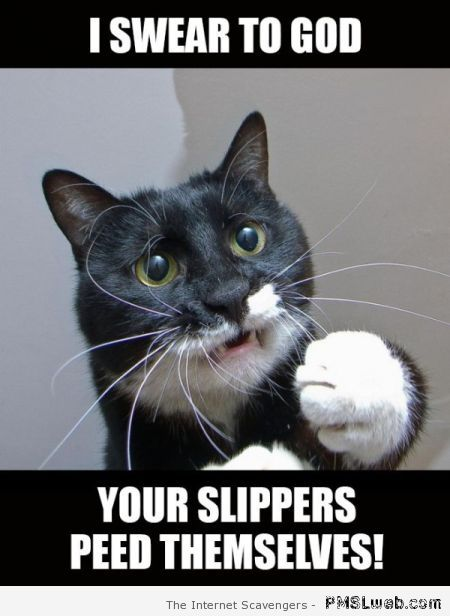 Your slippers peed themselves meme at PMSLweb.com