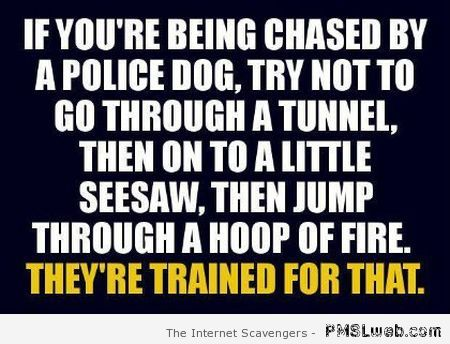 If you're being chased by a police dog humor at PMSLweb.com