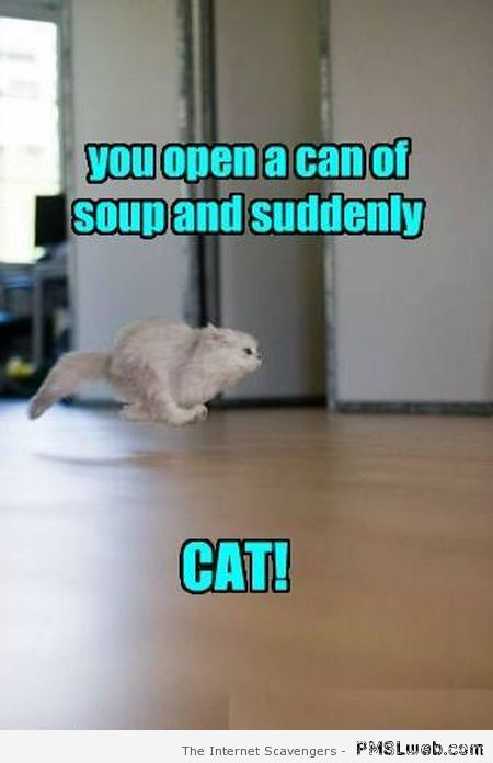 When you open a can cat humor at PMSLweb.com