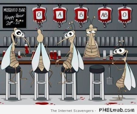 Mosquito bar – Amusing pictures at PMSLweb.com