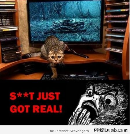 Horror movie cat humor at PMSLweb.com