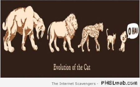 Funny evolution of the cat at PMSLweb.com