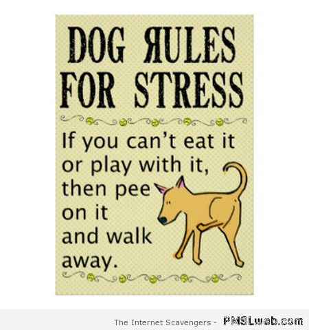 Dog rules for stress at PMSLweb.com