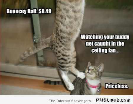 Caught in the ceiling fan cat meme at PMSLweb.com