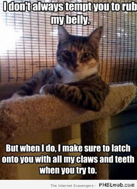 Funny most interesting cat in the world meme at PMSLweb.com