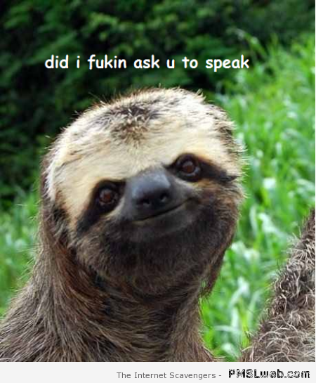 Did I ask you to speak funny sloth – Hump day fun zone at PMSLweb.com