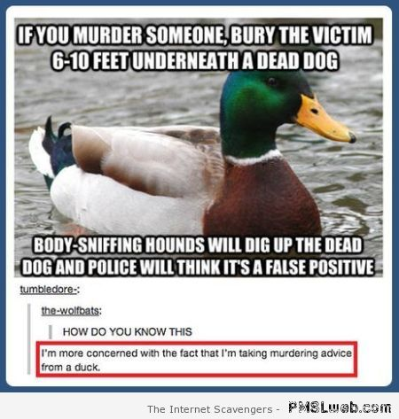 Murdering advice from a duck at PMSLweb.com