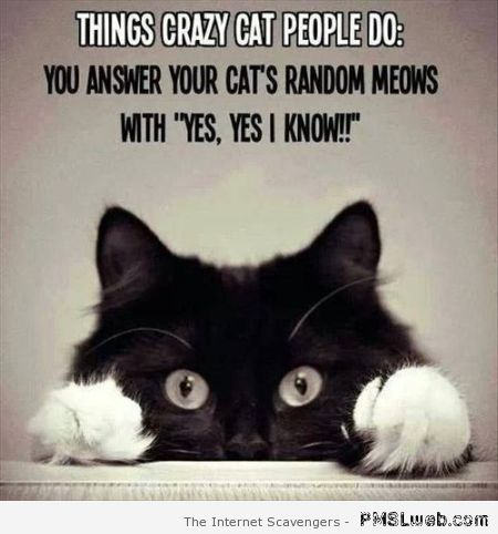 Things crazy cat people do at PMSLweb.com