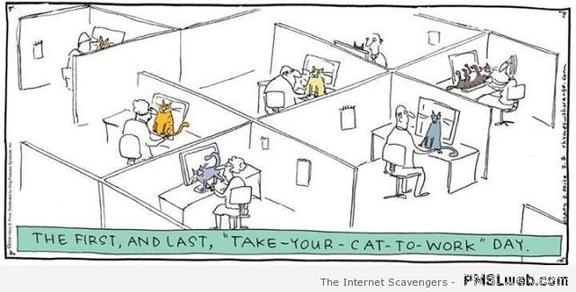 Take your cat to work humor at PMSLweb.com