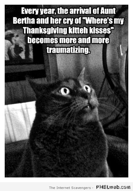 Thanksgiving cat humor – Thanksgiving funnies at PMSLweb.com
