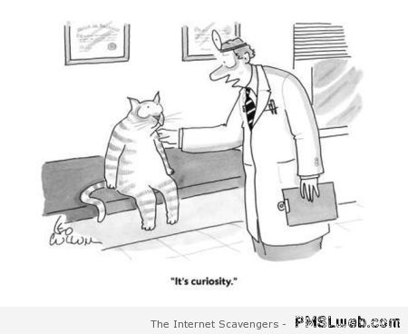 Funny curiosity killed the cat at PMSLweb.com