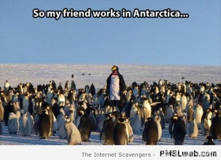 So my friend works in Antarctica - Tuesday funnies at PMSLweb.com