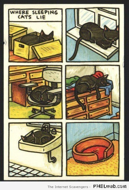 Where sleeping cats lie cartoon – Weekend giggles at PMSLweb.com