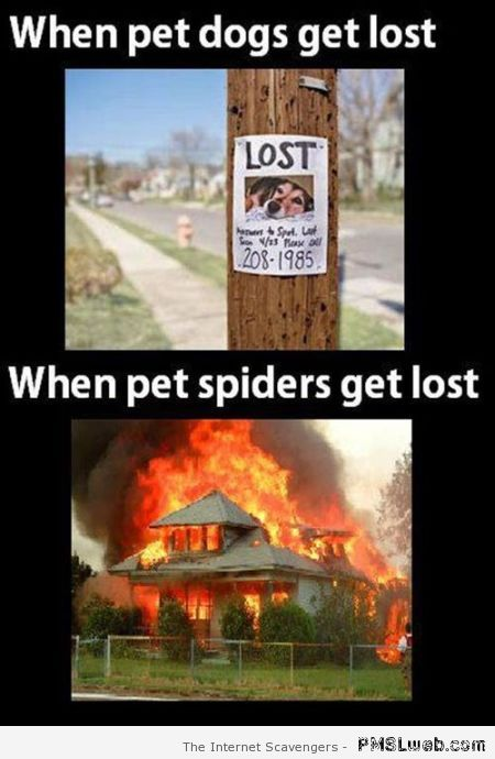 When pet spiders get lost at PMSLweb.com