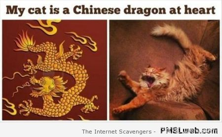 My cat is a Chinese dragon at  PMSLweb.com