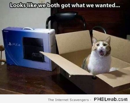 Cat gets what he wants for Christmas meme at PMSLweb.com
