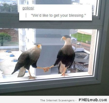 Birds want your blessing – Friday funnies at PMSLweb.com
