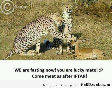 We are fasting Arab humor at PMSLweb.com