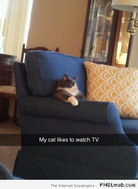 My cat likes to watch TV at PMSLweb.com