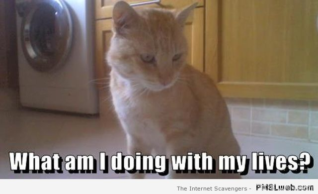 What am I doing with my lives cat meme at PMSLweb.com