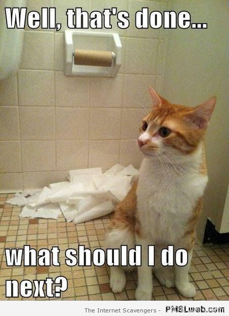 What should I do next cat meme at PMSLweb.com