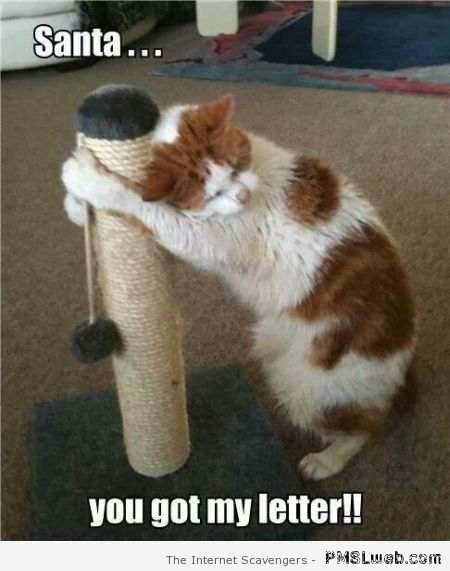 Santa you got my letter cat meme at PMSLweb.com