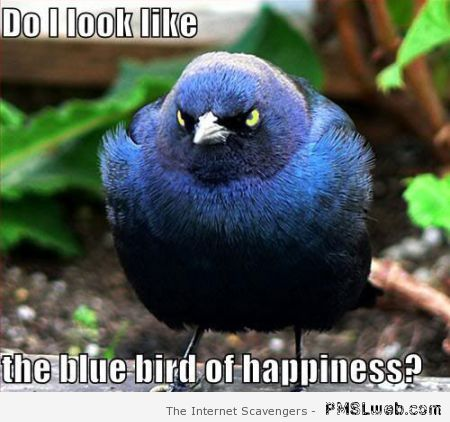 Bluebird of happiness meme at PMSLweb.com