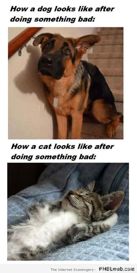 Funny how a dog looks versus how a cat looks at PMSLweb.com