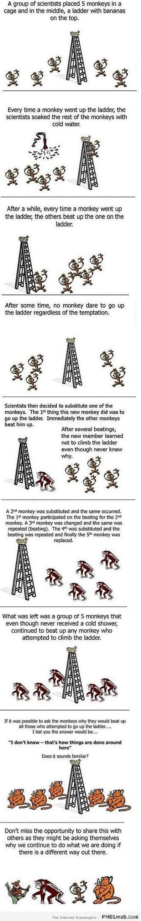 Funny and true monkey logic at PMSLweb.com