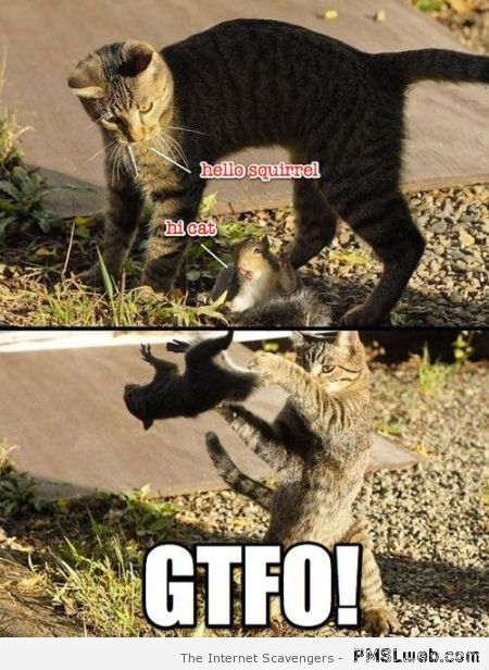Funny cat and squirrel meme at PMSLweb.com