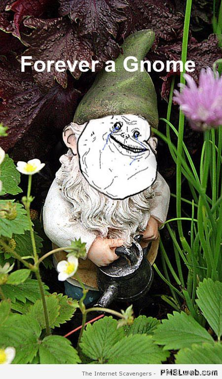 Forever a gnome – Amusing pictures at PMSLweb.com