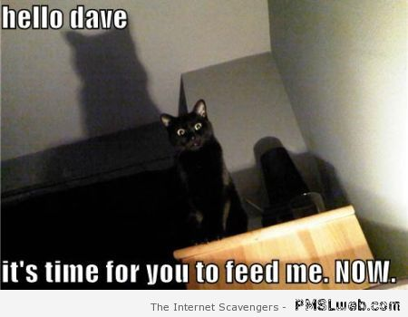 Feed me now cat meme at PMSLweb.com