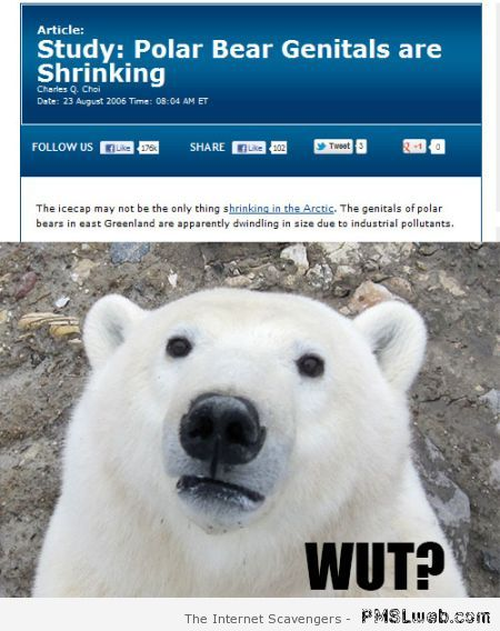 Polar bear's genitals are shrinking at PMSLweb.com