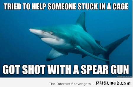 Misunderstood shark meme at PMSLweb.com