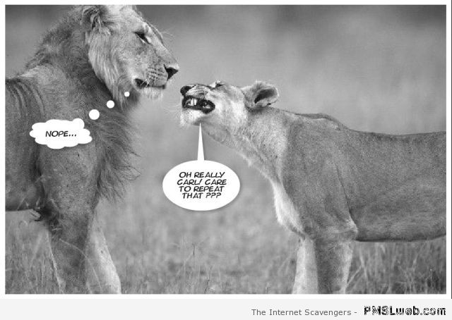 No messing with the lioness humor at PMSLweb.com