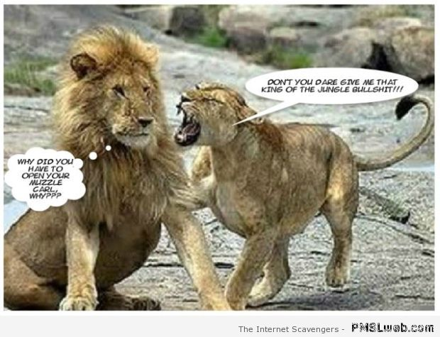 Female lion is not happy humor at PMSLweb.com
