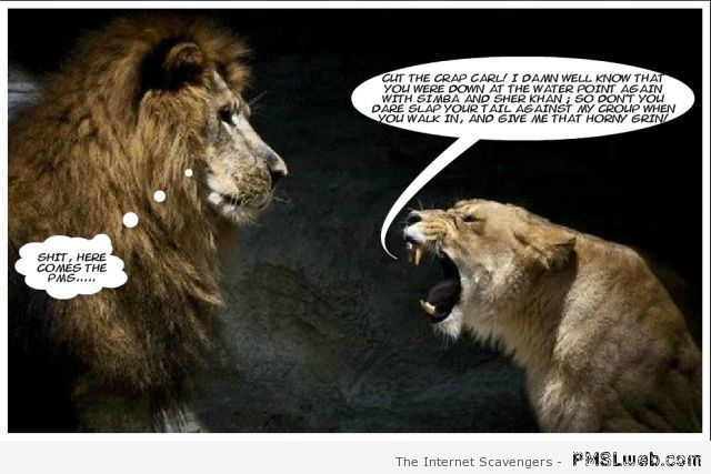 Nagging lioness – Mischievous Hump day at PMSLweb.com