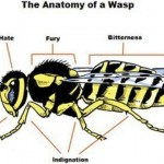 Funny anatomy of a wasp – TGIF fun at PMSLweb.com